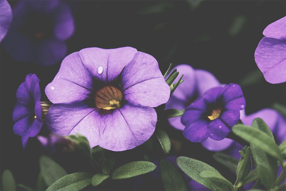 flower-zoom